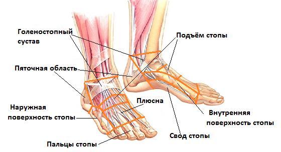 Сустав ступни болит клиники для лечения суставов в ульяновске