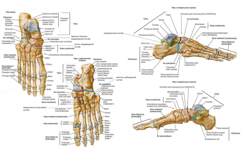 заболевания предплюсне-плюсневый сустава